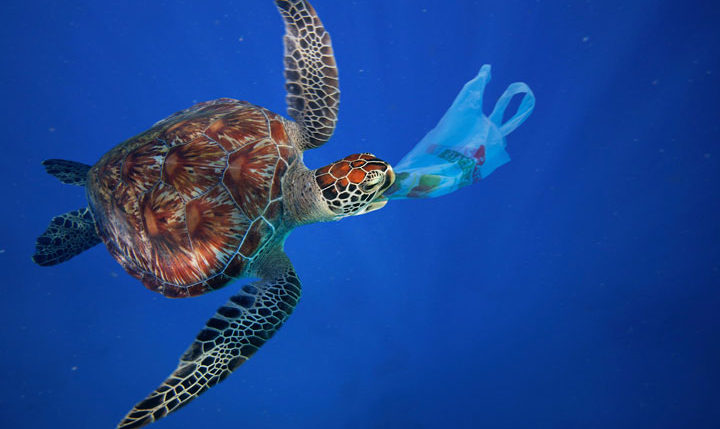 WWWF Tortue plastique pollution océans
