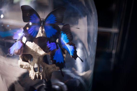 Détail de la décoration de l'escape game d'Epsilon Escape : crâne humain et papillons